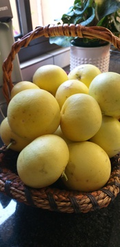 Our grapefruit tree is once again providing us with loads of vitamins
